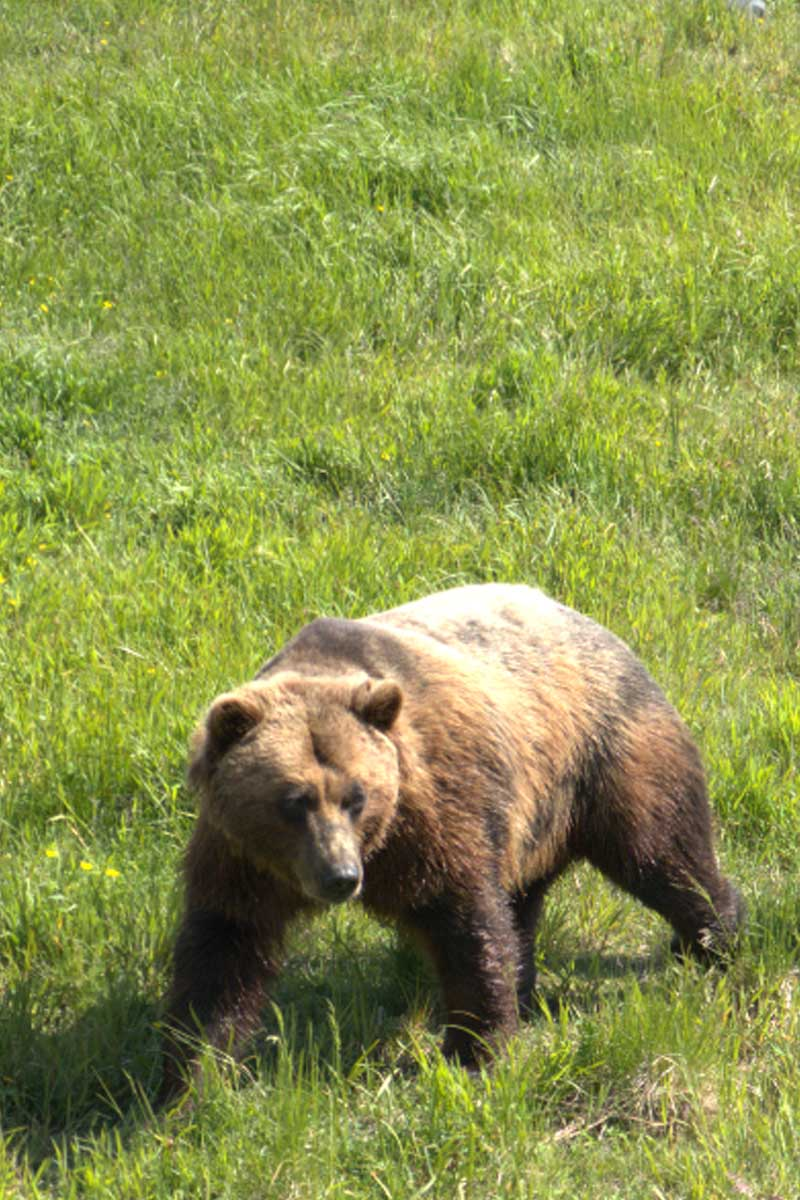 Places to Visit in Alaska – Wildlife Conservation Center